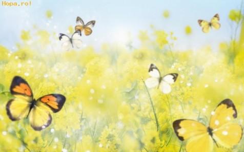Imagini-Artistice-Fluturi-si-Floricele-1_1236092616
